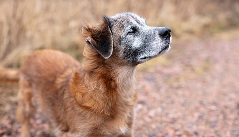 Seniorhund foder